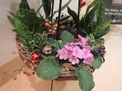 植物☆ / Rii