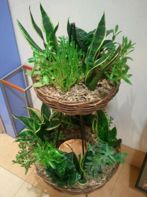植物☆☆ /Rii